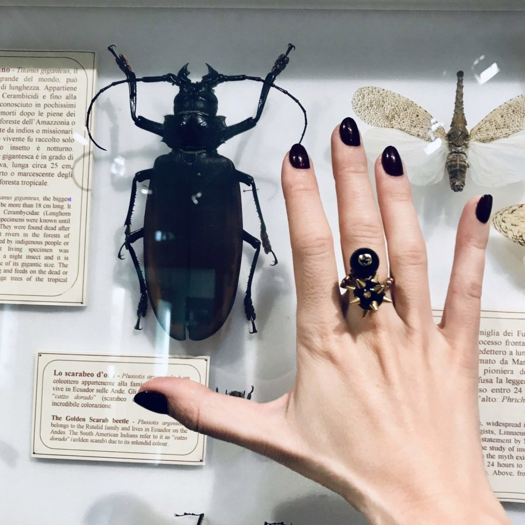 la specola, bug life, wunderkammer, cabinet of curiosities, secret florence, magic florence,